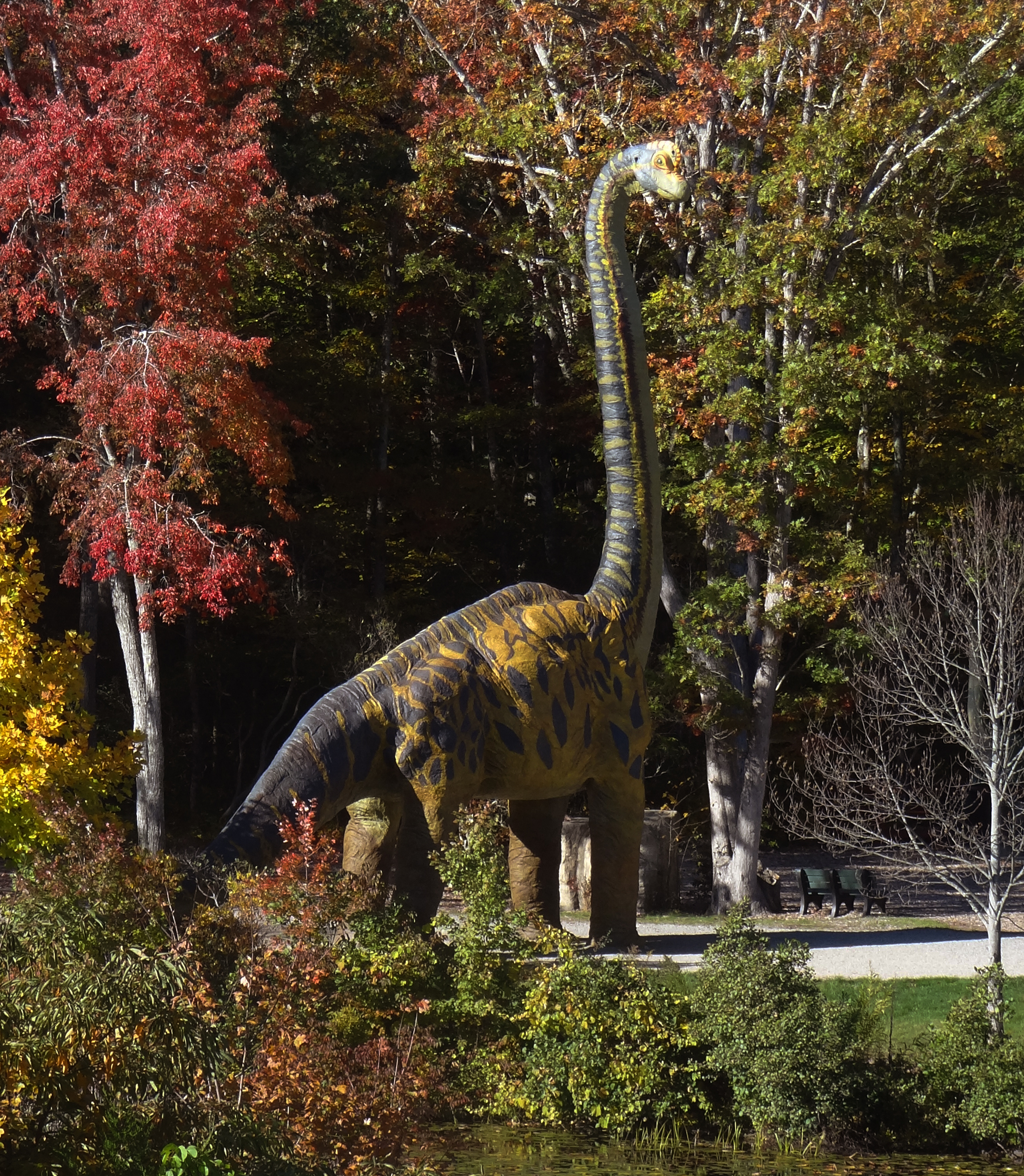 Brachiosaurus in the Fall