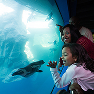 What's Now Open - Mystic Aquarium